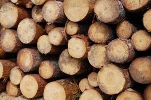Sprzedaż drewna regulowana przez UE