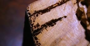 Jak szkodniki zagrażają drewnu?